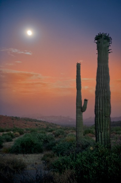 Full_moon_over_Saguaro