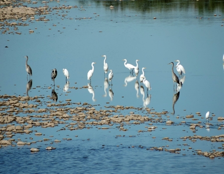 Gila_River_with_herons_and_egrets