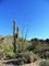 WT-Saguaro_ocotillo_barrel