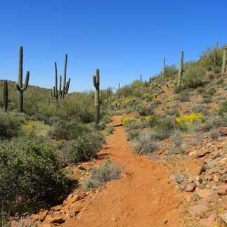 things to do maricopa county parks recreation