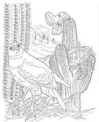 Desert-Animals-Coloring-Pages-Harris-Hawk