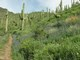1_Maricopa_Trail_-_Spur_Cross_Ranch_Conservation_Area