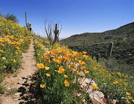 CC-Wildflowers_in_bloom_along_the_Go_John_Trail